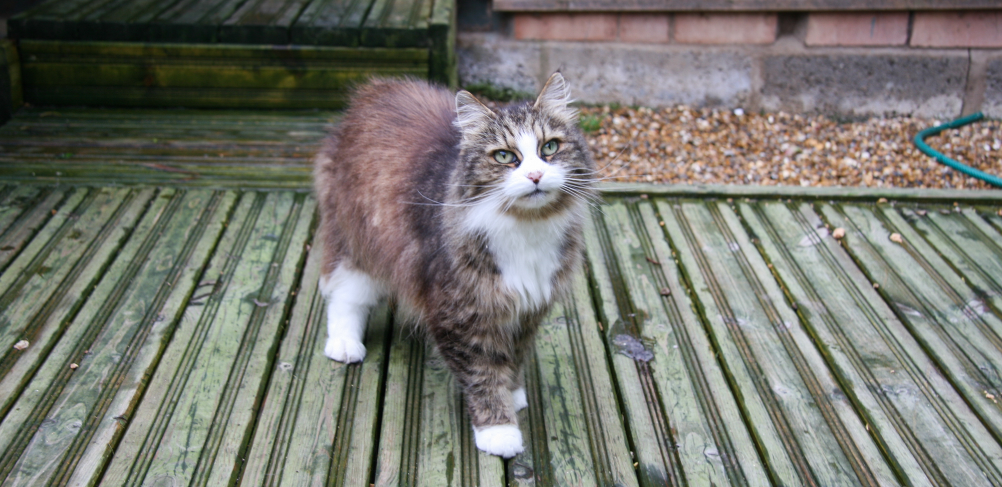 Cat Welfare Sussex